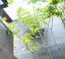 HOUSE 02/神奈川の家